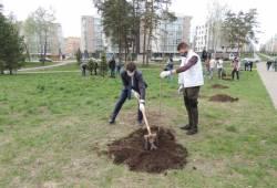 «Сад памяти» — к юбилею Победы